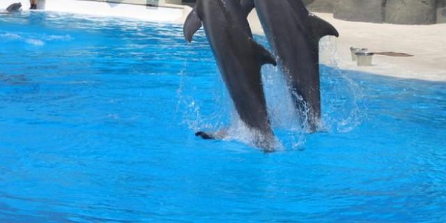 delfini-gardaland-svolta-animalista