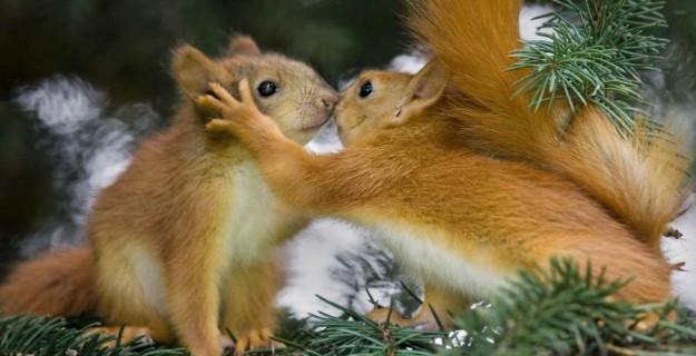 Valentine's Day Animal Love