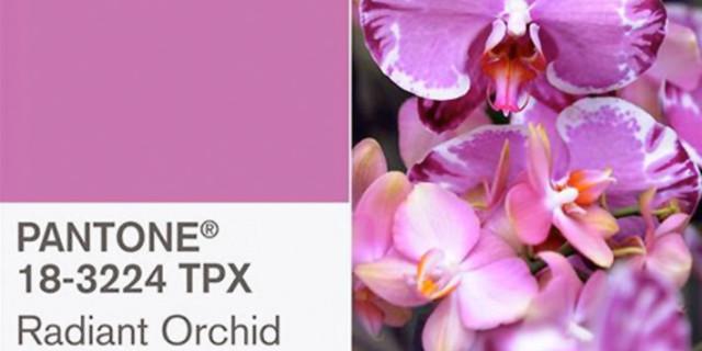 Strega comanda color…Radiant Orchid!