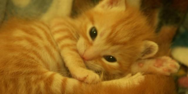 17 febbraio 2014 Giornata internazionale del gatto
