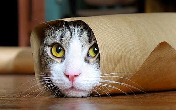 Il gatto, una creatura affascinante ed enigmatica. Per molti ma non per tutti! Alcune curiosità sul nostro adorabile amico