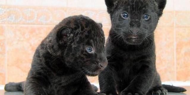 Due cuccioli in cerca di nome