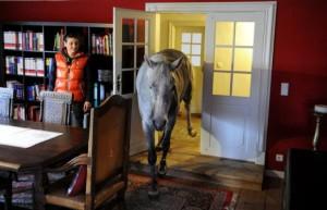 Nadar: il cavallo che vive in casa come se fosse un cane.