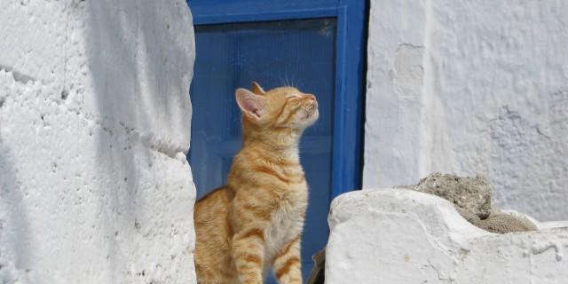 Che tempo farà? Scoprilo guardando il tuo gatto