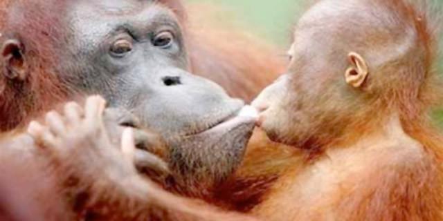 Baciarsi: perchè lo facciamo e a cosa serve