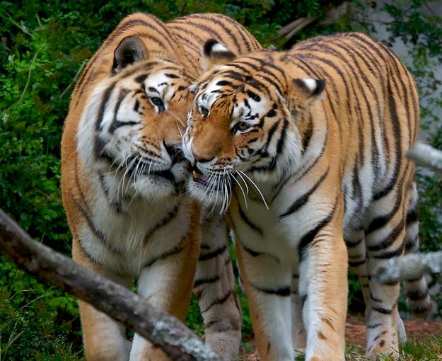 30 foto di animali che si baciano che vi faranno impazzire