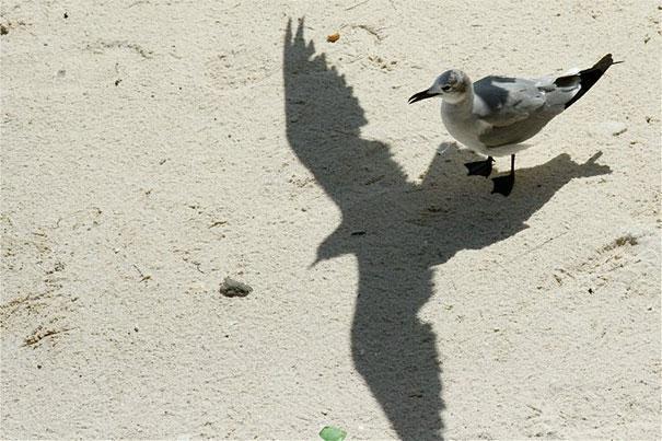 (foto: Web)