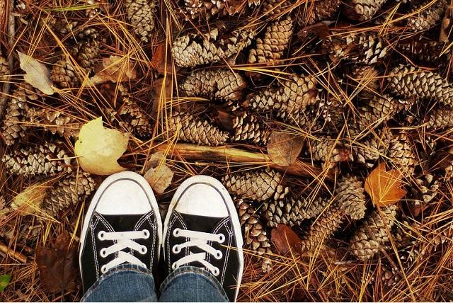 fonte: flickr.com