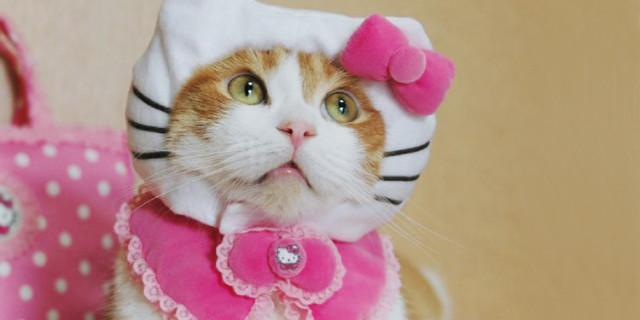 16 Divertenti Curiosità Su Hello Kitty… Che Non è Nemmeno un Gatto!