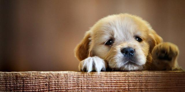 Risultati immagini per cani che ascoltano