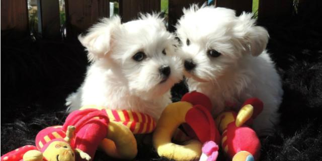 curiosità sui cagnolini