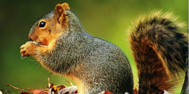 gli scoiattolo piantano piante